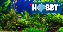 Hobby Bubble Air – Belüftung für's Aquarium